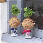 【迎光】造型苔球同樂會-大寶&大寶女友
