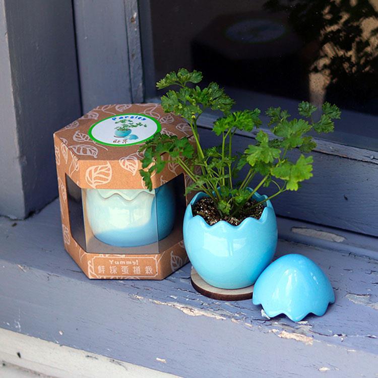 【迎光】Yummy!鮮採蛋植栽-藍