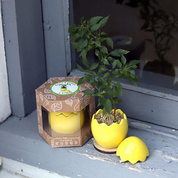 【迎光】Yummy!鮮採蛋植栽-黃
