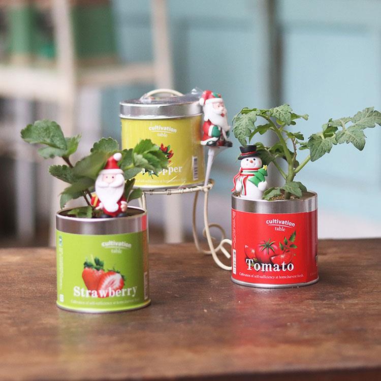 【迎光】耶誕快樂栽培罐組