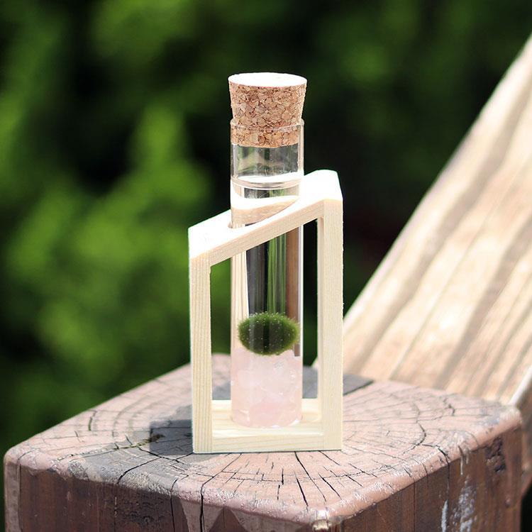 【迎光】幸福球藻-木試管