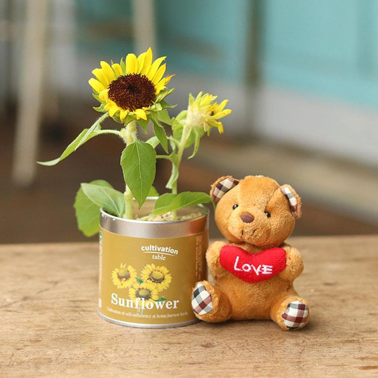 【迎光】珍愛小熊栽培罐組-向日葵