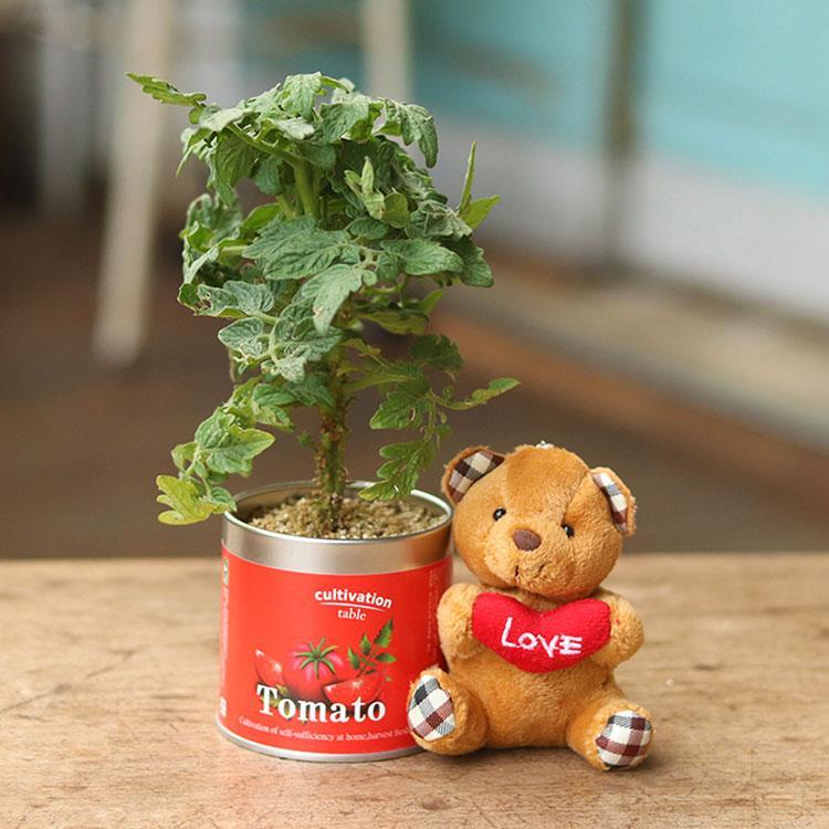 【迎光】珍愛小熊栽培罐組-迷你番茄