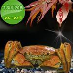 【台灣大閘蟹】鮮活共享組20隻(2.5~2.9兩/隻)