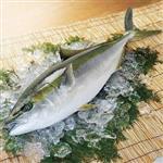 《好神》日本生凍冷凍青干魚1尾組(400-600g/尾)