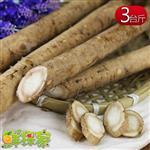 鮮採家 特選優質養生蔬菜之王白牛蒡3台斤(料理專用)