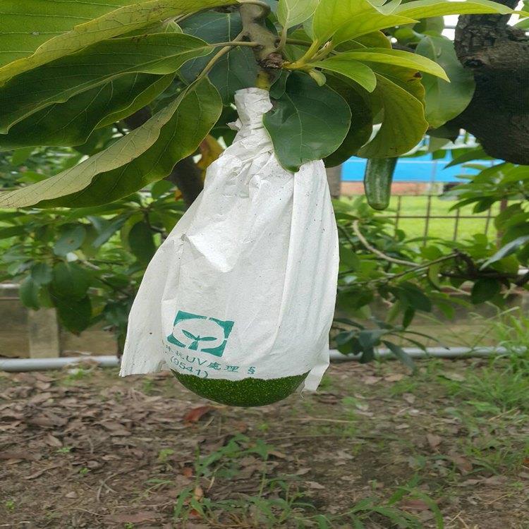 協泰直營農場 酪梨(約3-4顆)3300 公克(含包裝)