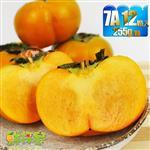 鮮採家 特級摩天嶺高山7A甜柿12入禮盒(單顆6.5-7.4兩)