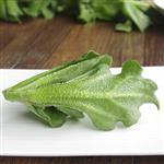 【鮮採家】綠色溫室水晶冰菜5盒入(單盒120g±10%)