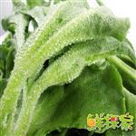 【鮮採家】綠色溫室水晶冰菜8盒入(單盒120g±10%)