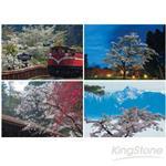 阿里山櫻花(2)-4張明信片