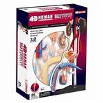 《4D PUZZLE 》人體器官 - 男性生殖系統