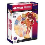 《4D PUZZLE 》人體器官 - 女性生殖系統