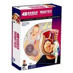 《4D PUZZLE 》人體器官 - 懷孕