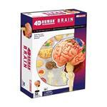 《4D PUZZLE 》人體器官 - 腦神經