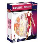 《4D PUZZLE 》人體器官 - 全身透析