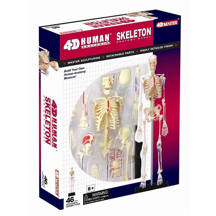 《4D PUZZLE 》人體器官 - 骨架