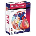 《4D PUZZLE 》人體器官 - 心臟