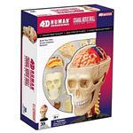 《4D PUZZLE 》人體器官 - 頭