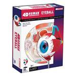 《4D PUZZLE 》人體器官 - 眼球