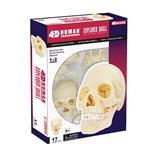 《4D PUZZLE 》人體器官 - 頭骨(1/2)
