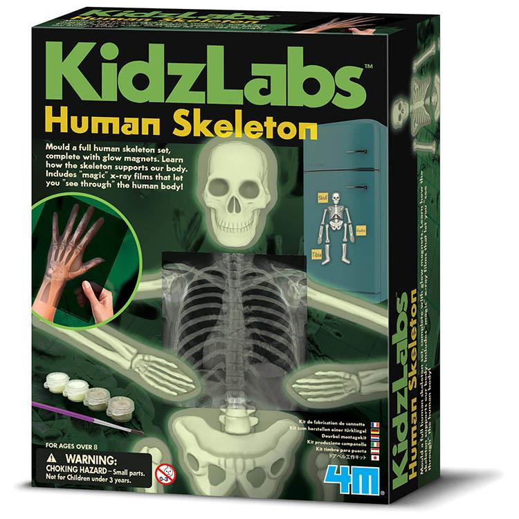 《4M科學探索》骨骼的奧秘 Human Skeleton