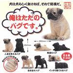 全套8款 擬真狗狗 P1 巴哥犬 扭蛋 轉蛋 模型 XMMOS