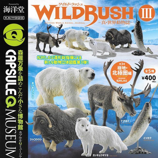全套5款 真世界動物誌 P3 極地北極圈篇 扭蛋 轉蛋 動物模型 第3彈 海洋堂 KAIYODO