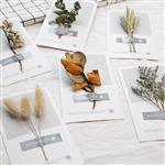 自然美太陽風貼紙乾燥花明信片/卡片(隨機出貨)