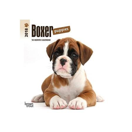 Boxer Puppies 2018 Calendar