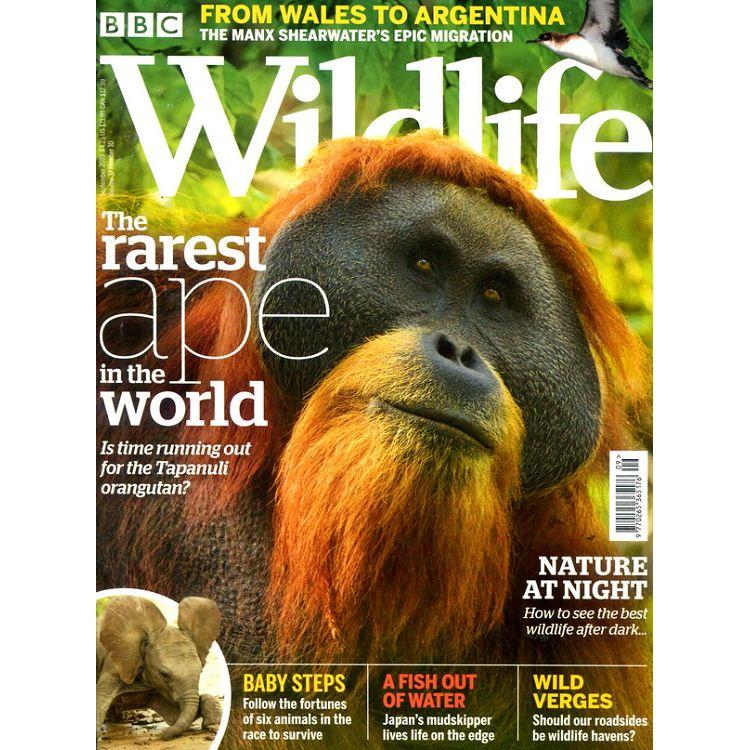 BBC Wildlife Vol.37 No.10 9月號_2019