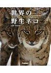 世界野生貓咪