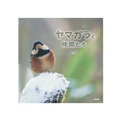赤腹山雀和朋友們