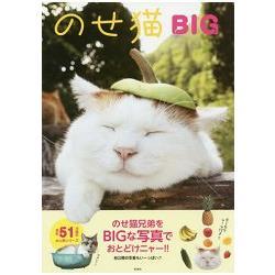 NOSE貓BIG-貓貓頭上放東西療癒寫真
