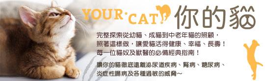 寵物潮流興起,時間流逝,陪伴多年的貓,也已經漸漸老去,該如何